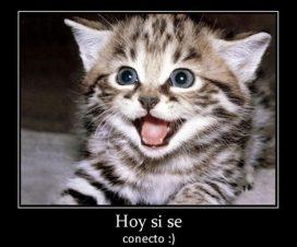 Imágenes de gatitos tiernos y emocionados